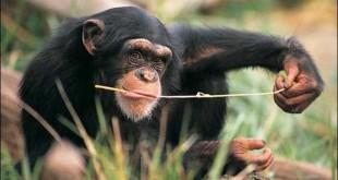 simpanse490083@